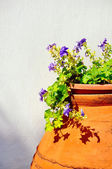 Pot with blue flowers on a background of a wall — Stock fotografie