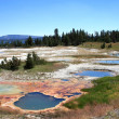Small ponds in Yellowstone National park — Stock Photo