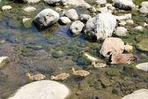 Nuoto famiglia di oche — Foto Stock
