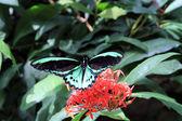 зеленые тропические бабочки — Стоковое фото