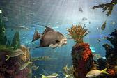 Vissen — Stockfoto