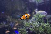 Fish in an aquarium — Stock Photo