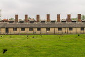 Chimneys of Auschwitz — Stock Photo