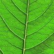 Green leaf close-up — Foto de Stock