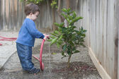 Boy watering a small tree — Stock Photo