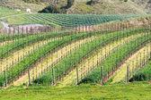 California winery — Stock Photo