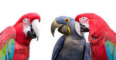 Parrot meeting — Stock Photo