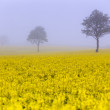 Tree in the yellow field — Stock Photo