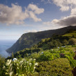 Azores Coastline - Stock Photo