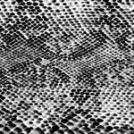 imitazione di pelle di rettile — Foto Stock #18803135