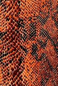 Reptile skin background in collor — Stock Photo