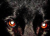Red animal eyes — Stock Photo