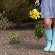 Woman in gumboots carrying yellow daffodils — Stock Photo