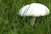 The mushroom — Stock Photo