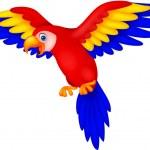 Cute toucan bird cartoon flying — Stock Vector #27378097