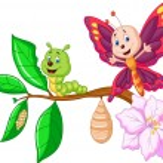 Butterfly metamorphosis — Stock Vector