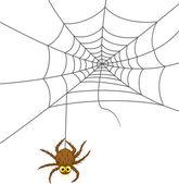 Spider web cartoon — Stock Vector