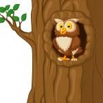 Owl In Tree — Stock Vector #44728299