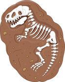 Tyrannosaurus rex fossil — Stock Vector