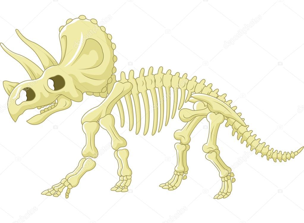 Squelette De Tricératops