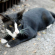 Black and white stray cat — Stock Photo