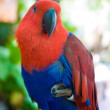 Red and blue parrot — Stock Photo #34683941
