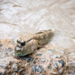 Mudskipper climbing stone — Stock Photo