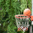 Nature surrounding basketball hoop — Stock Photo