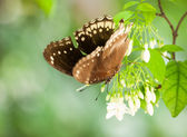 Butterfly on white flowers — Stock fotografie