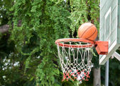 Nature surrounding basketball hoop — Photo