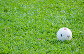 Plastic ball in the green grassy field — Stock Photo