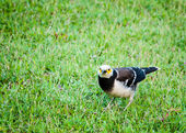 Bird standing on green grassy field — ストック写真