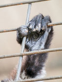 Wild animal's hand jailed behind the fence — Stock Photo