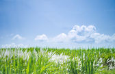 Nature background in windy day — Foto Stock