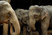 Fil ailesi — Stok fotoğraf