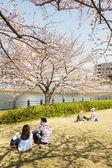 Sakura in Yokohama, Japan — Stock Photo