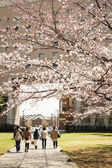 Sakura in Yokohama, Japan — Stock Photo