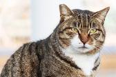 большие кошки — Стоковое фото