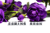 Coming soon with flowers — Stock Photo