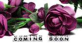 Coming soon with pink flowers — Stock Photo