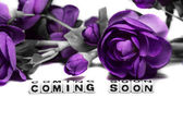 Coming soon with magenta flowers — Stock Photo