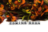 Coming soon message with colorful flowers — Stock Photo