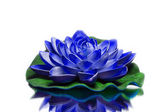 Blue lotus — Stock Photo