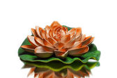 Orange colored lotus — Stock Photo