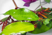 Water on green leaf — Stock Photo