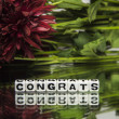 Stock Photo: Congrats with red flowers and green leaves