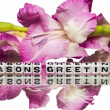 Seasons greetings — Stock Photo #37690617