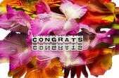 Congrats — Stock Photo