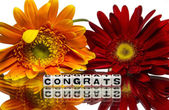 Congrats with red and yellow flowers — Stock Photo