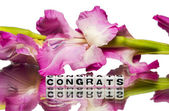 Congrats with pink flowers — Stock Photo